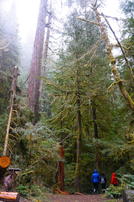 Have you ever walked among giants? You have no idea….