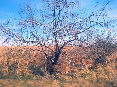 iLove Trees