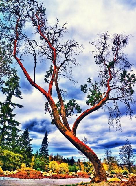 Tree(3)