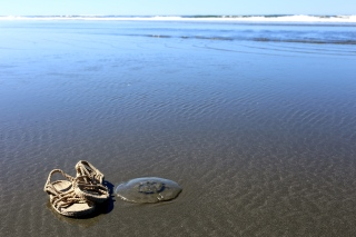 Cordas in the Wild =) How huge is this jelly fish, though!?