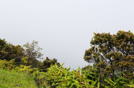 Koke'e State Park, Kauai, Hawaii