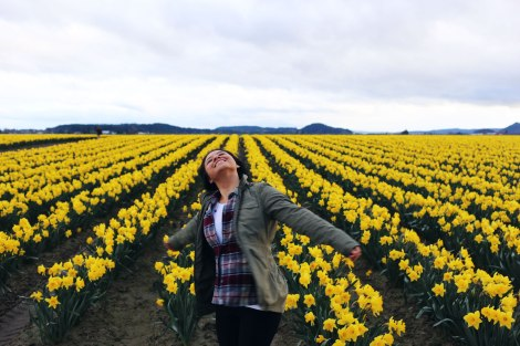 daffodil fields, PNW, Washington