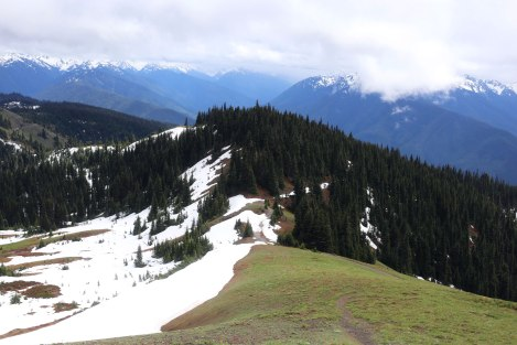 Hurricane Hill, Hurricane Ridge, Olympic National Park, Washington State