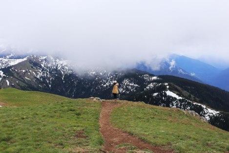 Hurricane Hill, Hurricane Ridge, Olympic National Park, Washington State