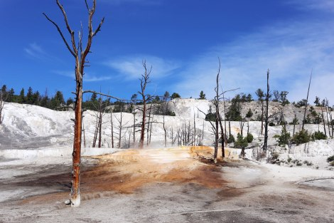 Angel Terrace, Yellowstone