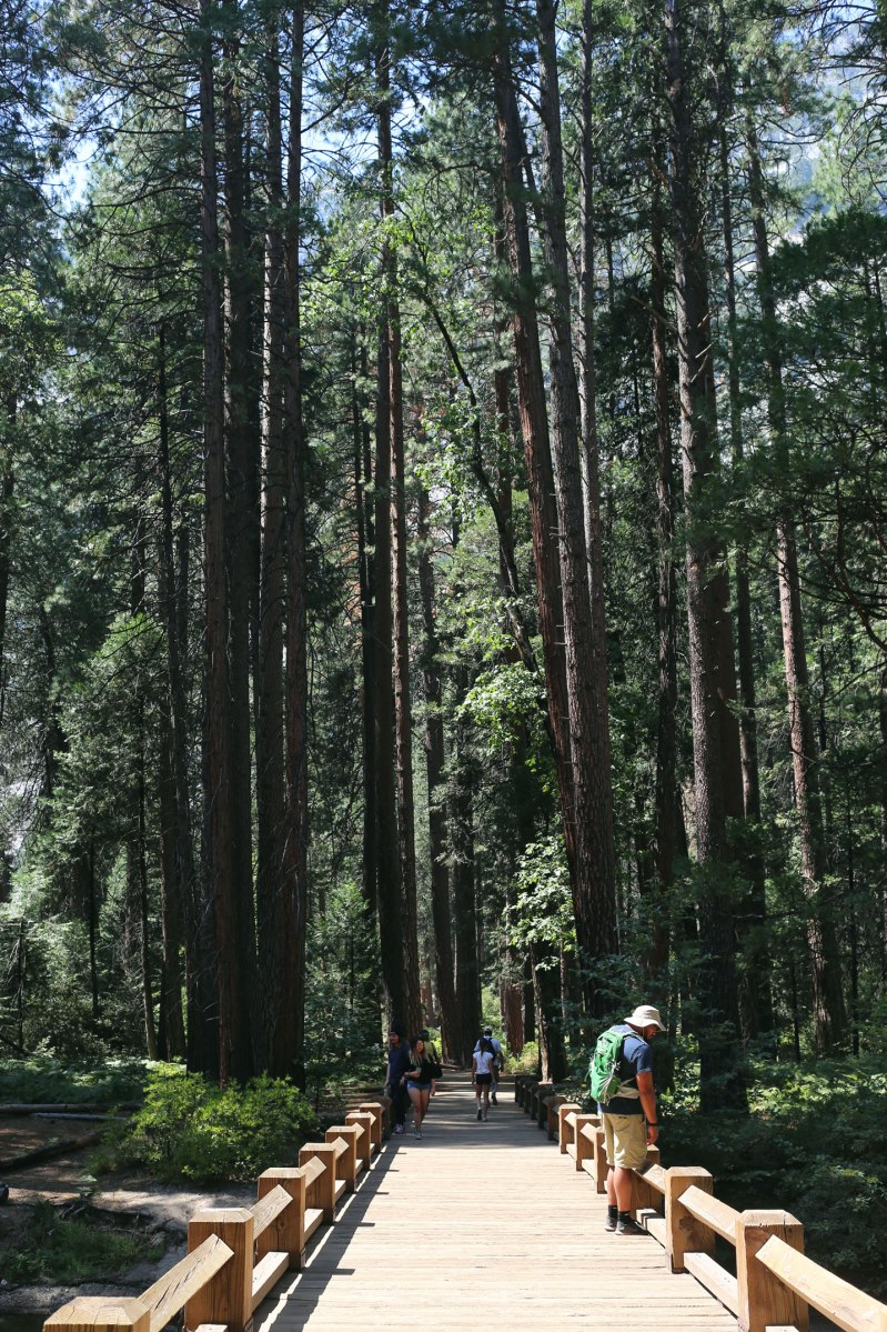 Yosemite, WildestCAroadtrip