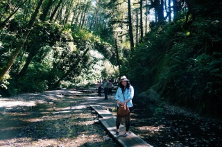 Redwoods National Park, coastal redwoods, #WildestCAroadtrip, USA summer road trip, Fern Canyon