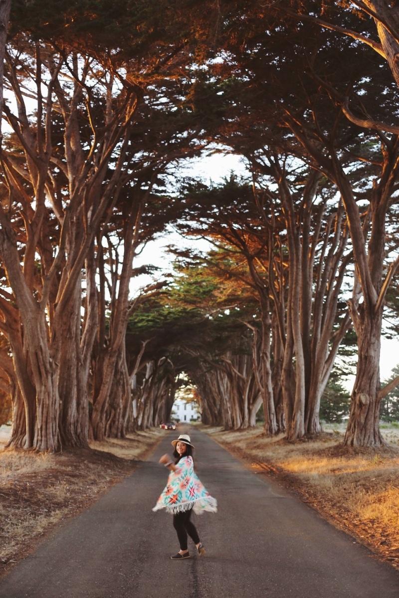 CA Coastal Highway Roadtrip, CA Road trip, PNW, #WildestCAroadtrip, Cypress Tree Tunnel, Point Reyes