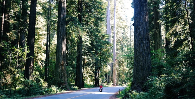 Redwoods National Park, coastal redwoods, #WildestCAroadtrip, USA summer roadtrip