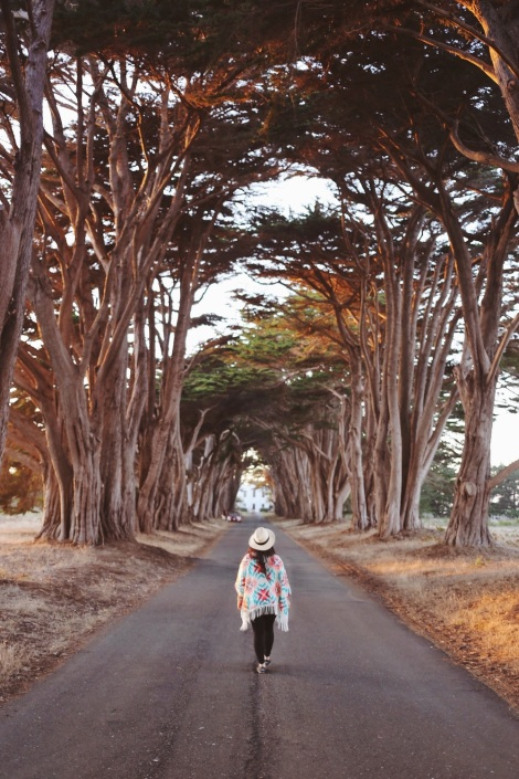 CA Coastal Highway Roadtrip, CA Road trip, PNW, #WildestCAroadtrip, Cypress Tree Tunnel, Point Reyes