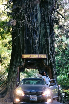 Redwoods National Park, coastal redwoods, #WildestCAroadtrip, USA summer road trip