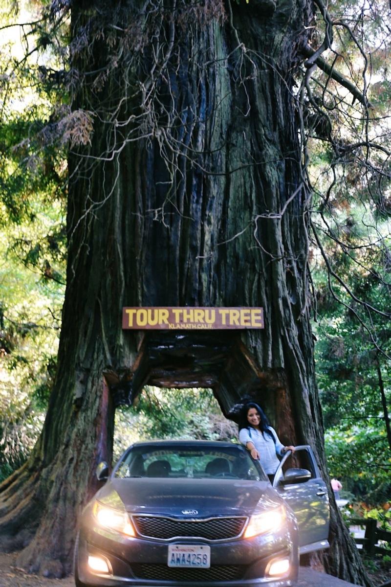 Redwoods National Park, coastal redwoods, #WildestCAroadtrip, USA summer road trip